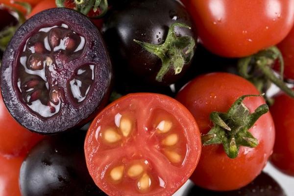 พืช GMOs เทคโนโลยีล้ำสมัยสร้างพืชพันธุ์ได้ตามใจต้องการ